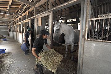 厩舎スタッフの仕事:競馬学校 JRA
